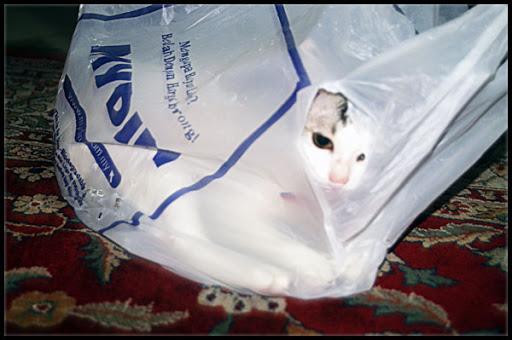 mia kucing comel