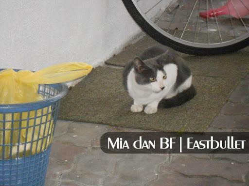 mia kucing